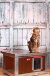 """INFRA HEATED Thermo WOODY Cat house """"CAT"""" with Window insize (LxWxH:54x38x28cm)"""